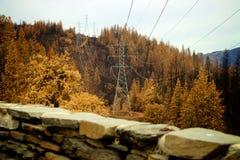Stromleitung durch den Wald Stockbild
