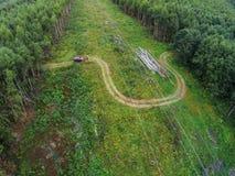Stromleitung läuft den Wald durch Stockfoto