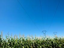 Stromleitungen und Maisgetreide Stockbild