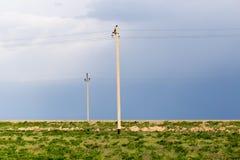 Strommaste in der Wüste Stockfotografie