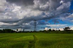 Strommasten auf dem Reisgebiet lizenzfreie stockfotos