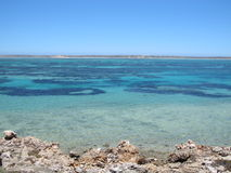 Stromy punkt, Westernmost punkt, rekin zatoka, zachodnia australia obrazy royalty free