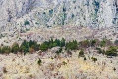 Stromy skłon góra Obrazy Stock