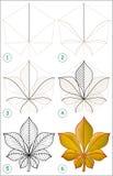 Strona pokazuje dlaczego uczyć się rysować cisawego liść krok po kroku Obrazy Royalty Free