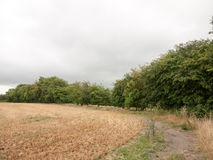 Strona zbierający pole na chmurzącym letnim dniu tropi Fotografia Stock
