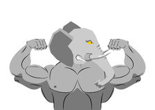 Strong angry elephant. aggressive Evil beast fitness. Wild anima. L athlete with huge muscles. Bodybuilder with trunk and big ears. Sports team mascot Royalty Free Stock Photos