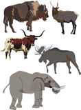 Strong animals collection Stock Image