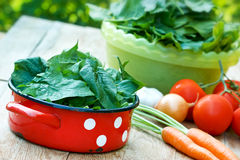 Strong antioxidant - spinach Royalty Free Stock Photography