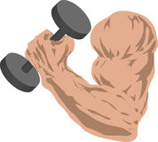 Strong arm. Muscular arm grasping a barbell Stock Images