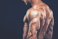 Strong athletic man back on dark background.  Stock Image