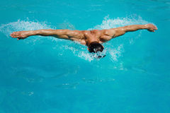 Strong athletic man swimming butterfly style in the pool Stock Photos