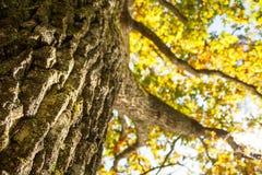 Strong bark Stock Image