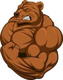 Strong bear. Vector illustration of a strong  bear with big biceps Stock Image