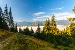 Strong beautiful fog and sunbeams in the forest Royalty Free Stock Photo