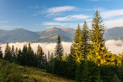 Strong beautiful fog and sunbeams in the forest Stock Photos