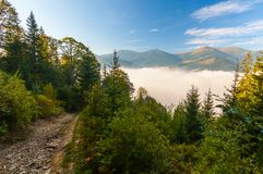 Strong beautiful fog and sunbeams in the forest Stock Images
