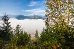 Strong beautiful fog and sunbeams in the forest Royalty Free Stock Images