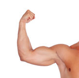 Strong biceps. Isolated on a white background royalty free stock photography