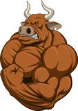 Strong bull. Vector illustration of a strong bull with big biceps Royalty Free Stock Images