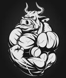 Strong bull Stock Photo