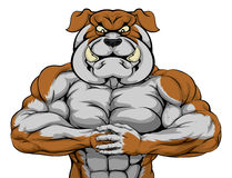 Strong Bulldog Mascot. Mean looking bulldog character ready for combat punching fist into palm Stock Photo