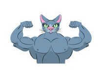 Strong cat. Power animal bodybuilder. Pet with big muscles. Embl Royalty Free Stock Photos