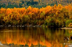 Strong colourful autumn forest with reflection on river surface. Background Stock Images