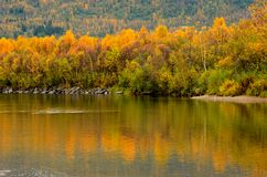 Strong colourful autumn forest with reflection on river surface. In northern norway Stock Photo