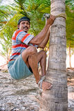Strong deft man  are climbing on coconut tree Stock Images
