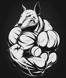 Strong dog. Vector illustration of a strong  dog with big biceps Stock Photos