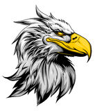 Strong eagle head. Bald eagle head mascot on the white background. Vector illustration Royalty Free Stock Photos