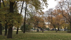 Strong fall of the leaves from the trees. Strong fall of yellow leaves from the trees, city Park in autumn, in the distance, people walking, parked buses, drive stock footage