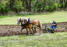 Strong farmer and horse team plowing demonstration. A farmer demonstrates how to operate an antique plow with a team of farm horses during the Buchanan plow days Royalty Free Stock Photography