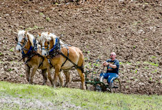 Strong farmer and horse team plowing a field. A farmer demonstrates how to operate an antique plow with a team of farm horses during the Buchanan plow days in Stock Image