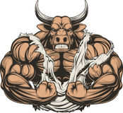 Strong ferocious bull. Vector illustration of a strong bull with big biceps Stock Image