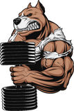 Strong ferocious dog. Vector illustration of a ferocious pitbull raises the dumbbells on biceps Stock Photo