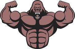 Strong ferocious gorilla. Vector illustration of a strong gorilla, with big biceps Royalty Free Stock Photography
