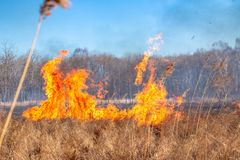 A strong fire spreads in gusts of wind through dry grass stock photo