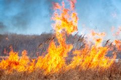 A strong fire spreads in gusts of wind through dry grass royalty free stock images