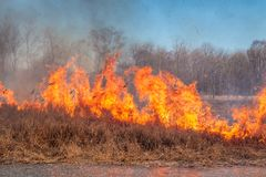 A strong fire spreads in gusts of wind through dry grass stock image