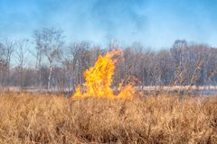 A strong fire spreads in gusts of wind through dry grass royalty free stock photo