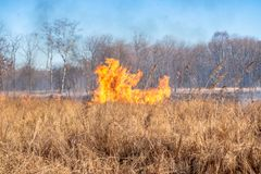 A strong fire spreads in gusts of wind through dry grass royalty free stock image