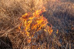 A strong fire spreads in gusts of wind through dry grass royalty free stock photos