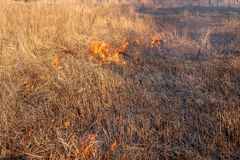 A strong fire spreads in gusts of wind through dry grass stock images
