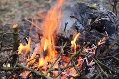 Strong fire from the tree branches Stock Photography