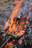 Strong fire from the tree branches Royalty Free Stock Photography
