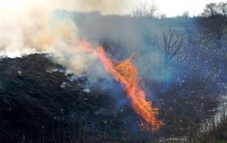 Fire on the field, a strong flame from the burning of grass for a better growth of new vegetation. A strong flame from the burning of grass for a better growth Stock Photo