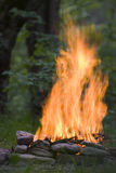 Strong flame of camp-fire Stock Photography