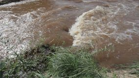 Strong flood stream of muddy river stock footage