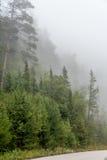 Strong fog. Stock Photo
